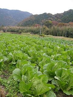 2008-11-9 収穫感謝祭 037.jpg
