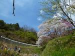 2014-3 伊勢神宮&桜 015.JPG